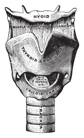 La boîte vocale, illustration vintage gravé. Banque d'images - 41711864