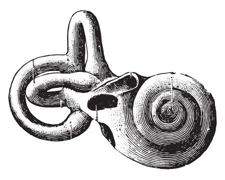 the cochlea: Semicircular canals and shell, vintage engraved illustration. Illustration