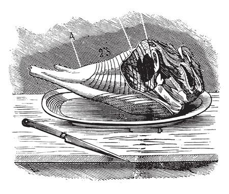 dissection: Gigot, vintage engraved illustration. Illustration