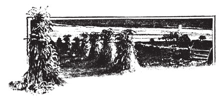 전 분 옥수수, 빈티지 새겨진 그림에서 발견.