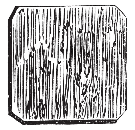 plywood: Cheese board, vintage engraved illustration.