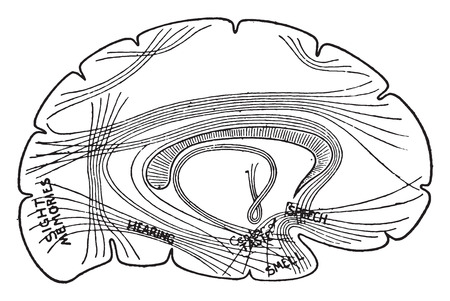 Diagram showing important centers in the brain and their association, vintage engraved illustration.