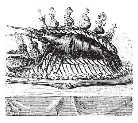 temptation: Whole lobster garnished with hatelet, vintage engraved illustration.