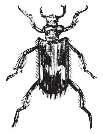 Heterocera, vintage engraved illustration.