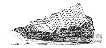 Grenadin manzo, vintage illustrazione inciso. Archivio Fotografico - 41712221