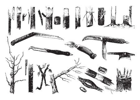 Grafting and grafting knives, vintage engraved illustration. Ilustração