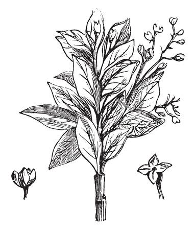 Fusain, vintage engraved illustration. Illustration