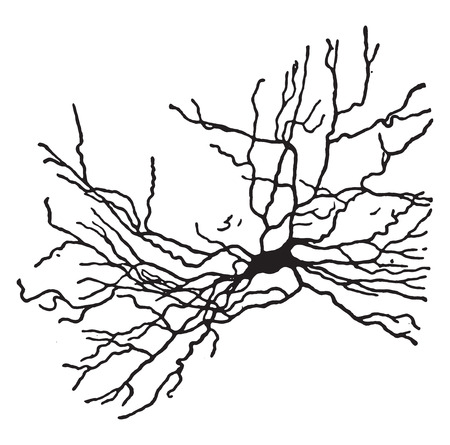 neurone: A type of nerve-cell, , vintage engraved illustration.