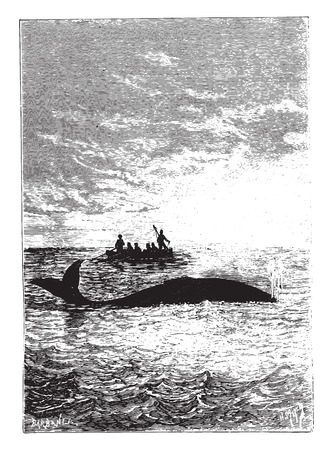 The whale stood one cable, vintage engraved illustration.