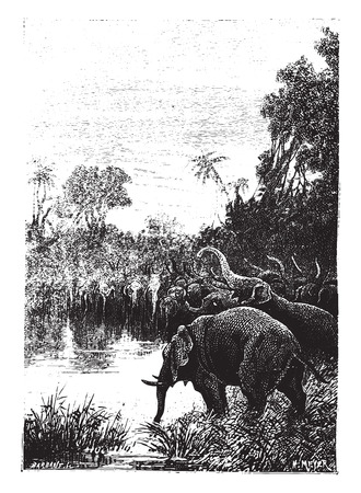 illustration: The elephants came to drink, vintage engraved illustration. Illustration