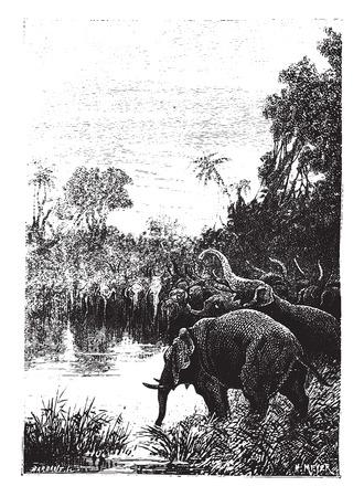 came: The elephants came to drink, vintage engraved illustration. Illustration