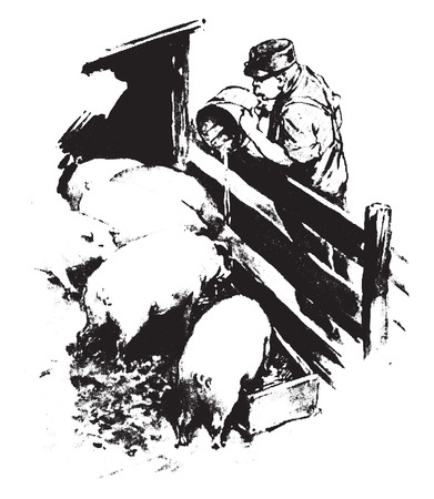 drank: The hogs drank the tobacco water, and twenty seven of them died, vintage engraved illustration.
