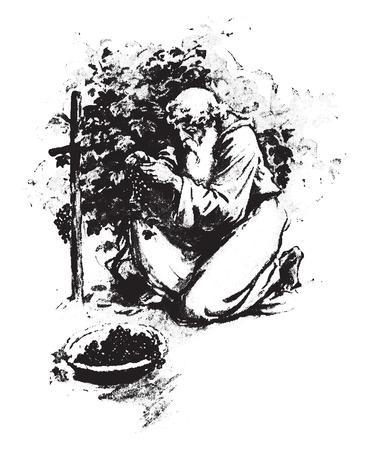 And Noah became a husbandman, vintage engraved illustration.