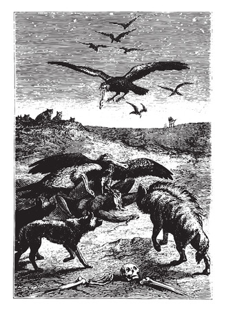 ancient bird: Wild beasts inhabitants of the land, vintage engraved illustration.