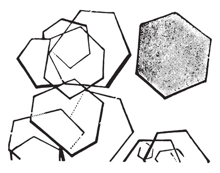 often: Cystine, six sided plates, often superimposed, vintage engraved illustration.