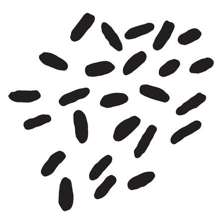 pathogen: Bacillus typhosus, ilustraci�n de la vendimia grabado.