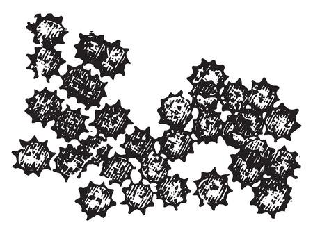 円鋸歯状の赤い血微粒子、ヴィンテージには、図が刻まれています。  イラスト・ベクター素材