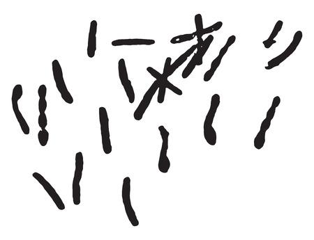 l�pre: Bacille de la l�pre, mill�sime grav� illustration. Illustration