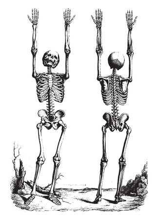 theory: Outline of a Theory and anatomical nomenclature, vintage engraved illustration. Illustration