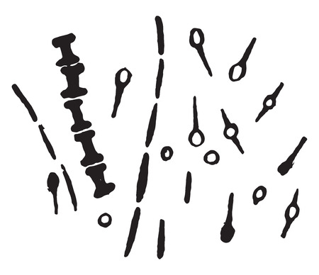 The forms of bacillus tetani, vintage engraved illustration.