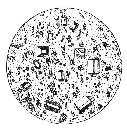 urine: Some deposits from ammoniacal urine, vintage engraved illustration. Illustration