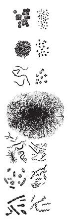 Nomenclature of schizomycetes, vintage engraved illustration. Illustration