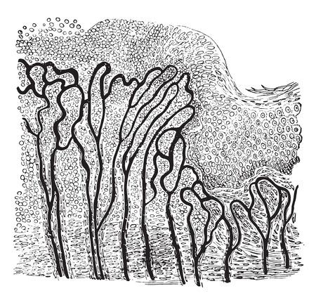 治癒: 創傷、ビンテージの刻まれた図の国境をセクション。  イラスト・ベクター素材