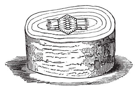burned: Block of wood with the design ready to be burned, vintage engraved illustration. Industrial encyclopedia E.-O. Lami - 1875.