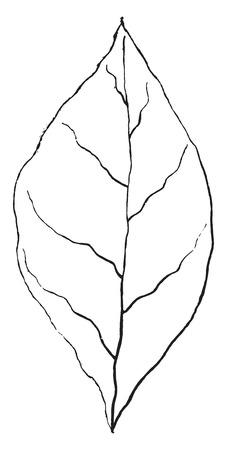 Leaf unfolded, vintage engraved illustration. Industrial encyclopedia E.-O. Lami - 1875. Ilustração