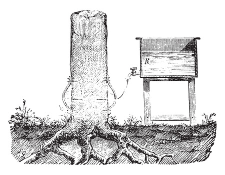 penetration: Penetration of wood by the life sucking, vintage engraved illustration. Industrial encyclopedia E.-O. Lami - 1875.