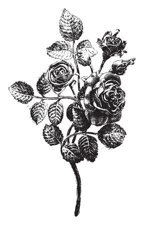 씨 Favier 워크샵, 빈티지 새겨진 그림에서 실행 단조 장미. 산업 백과 사전 E.-O. 라미 - 1875.