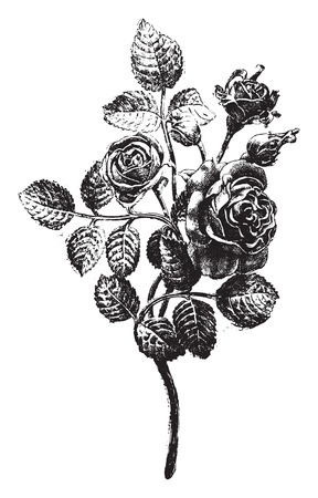 execute: Wrought iron roses, executed in Mr. Favier workshop, vintage engraved illustration. Industrial encyclopedia E.-O. Lami - 1875.
