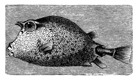 ichthyology: Trunkfish, vintage engraved illustration. La Vie dans la nature, 1890.