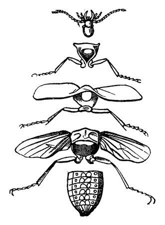 animal body part: Body parts of an insect, vintage engraved illustration. La Vie dans la nature, 1890.