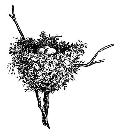 oiseau dessin: nids Hummingbird, illustration vintage grav�. La Vie Dans la nature, 1890.