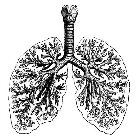 두 사람의 폐의 다이어그램, 빈티지 새겨진 된 그림. 보헤미안 1890, 라 자연 DANS.