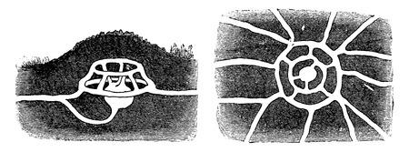 tunnel view: A molehill, vintage engraved illustration. La Vie dans la nature, 1890. Illustration
