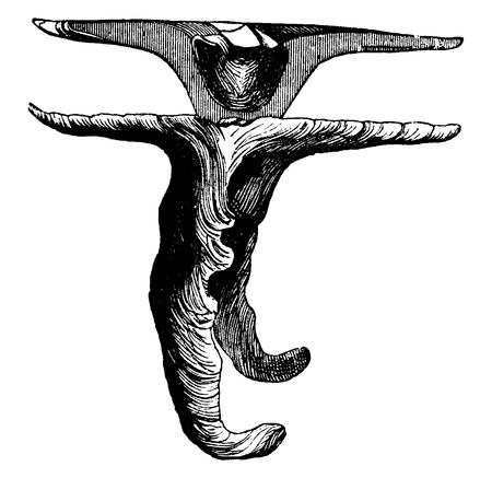 eardrum: Malleus, vintage engraved illustration. La Vie dans la nature, 1890.