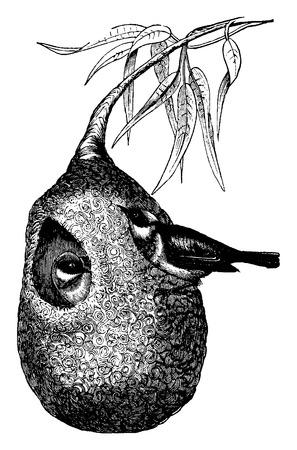 birds nest: Penduline Tit and nest, vintage engraved illustration. La Vie dans la nature, 1890. Illustration