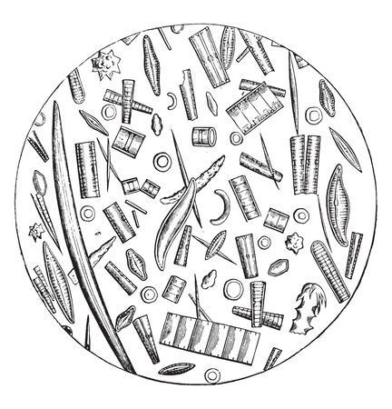 珪藻土、顕微鏡写真、ヴィンテージ彫刻イラスト。ラ・ヴィー・ダンズ・ラ・ネイチャー、1890年。