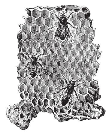Cells of a beehive, vintage engraved illustration. La Vie dans la nature, 1890.
