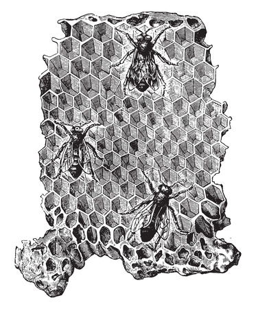 Cells of a beehive, vintage engraved illustration. La Vie dans la nature, 1890.
