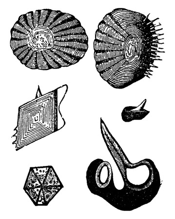 nodules: Various forms of fish scales, vintage engraved illustration. La Vie dans la nature, 1890.