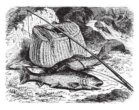Brown trout, vintage engraved illustration. La Vie dans la nature, 1890.
