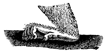 primate biology: Monkey posterior hand, vintage engraved illustration. Natural History of Animals, 1880.