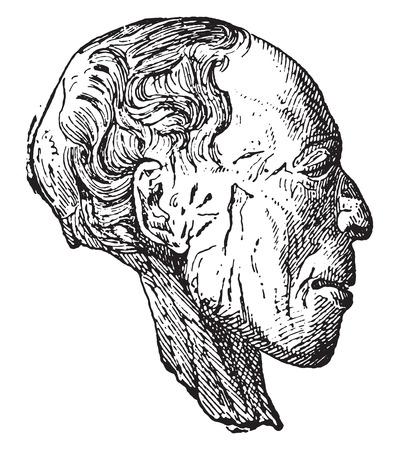 strippad: Mummy head stripped of his bandages, vintage engraved illustration. Illustration