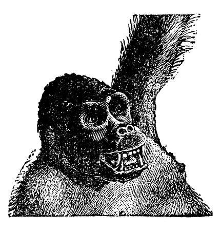 genus: Old gorilla head, vintage engraved illustration. Natural History of Animals, 1880.