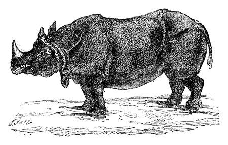 herbivore natural: Rhinoceros or rhino, vintage engraved illustration. Natural History of Animals, 1880.