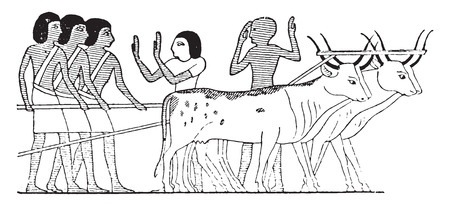 The oxen dragging the catafalque, vintage engraved illustration.