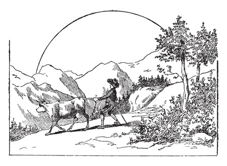 The natural and cow, vintage engraved illustration. Ilustrace